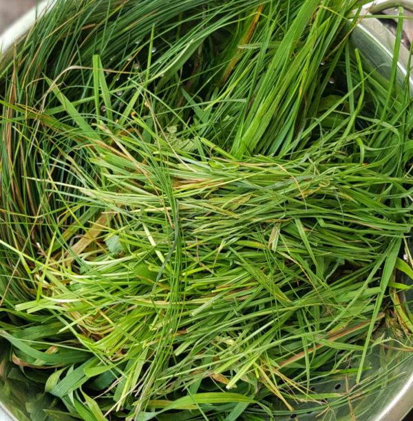 Trester aus Gras wiederverwenden